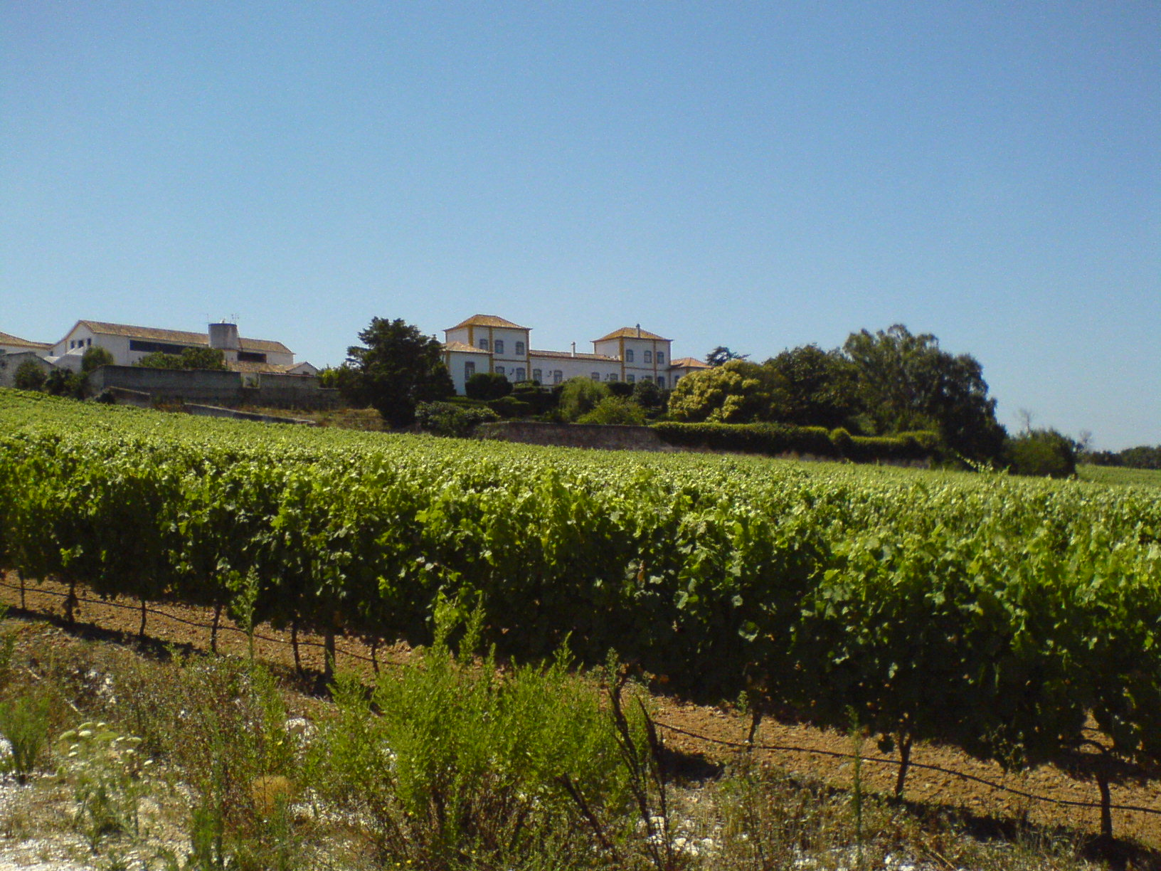 The Fine View of the Vines